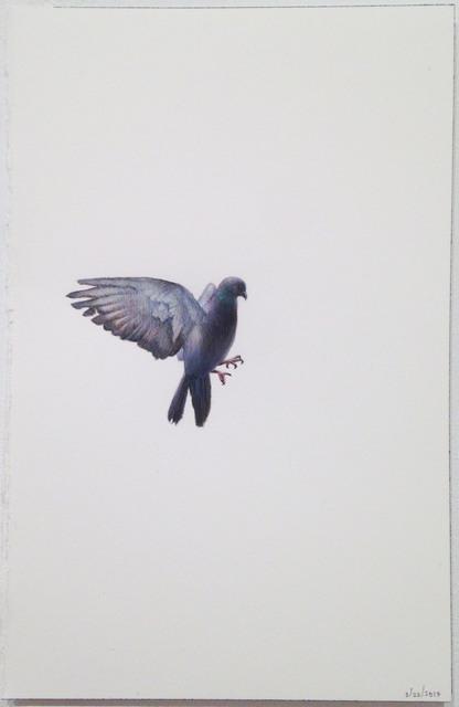 , 'Pigeon in Flight,' 2017, Garvey | Simon