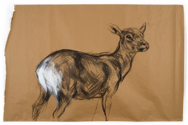 , 'Untitled (Deer 2) ,' 2009, Tayloe Piggott Gallery