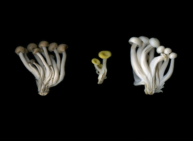 , 'Pilze (Fungi),' 2018, Galerie Judith Andreae