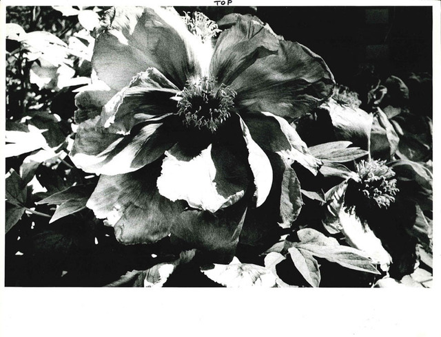 , 'Light and Shadow 1: (Flower),' 1981, Taka Ishii Gallery
