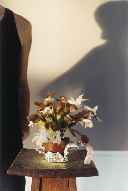 , 'TIGA CACTUS,' 2005, Galería Juana de Aizpuru