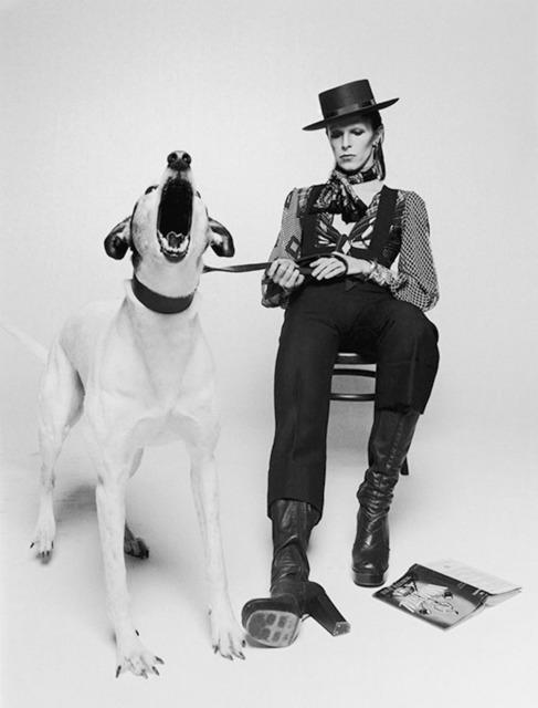 Terry O'Neill, 'David Bowie  'Diamond Dogs', view 2', 1974, Gallery 270