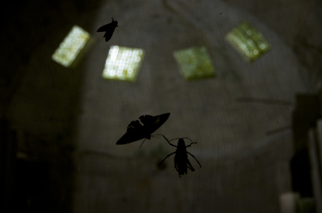 , 'Mosca (Xilitla),' 2010, Proyecto Paralelo