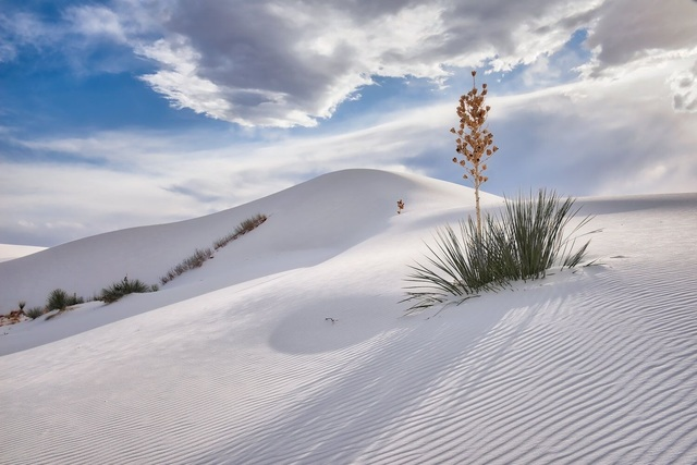 , 'Yucca on Dune and Approaching Storm Clouds, White Sands National Monument, New Mexico,' ca. 22016, Afterimage Gallery