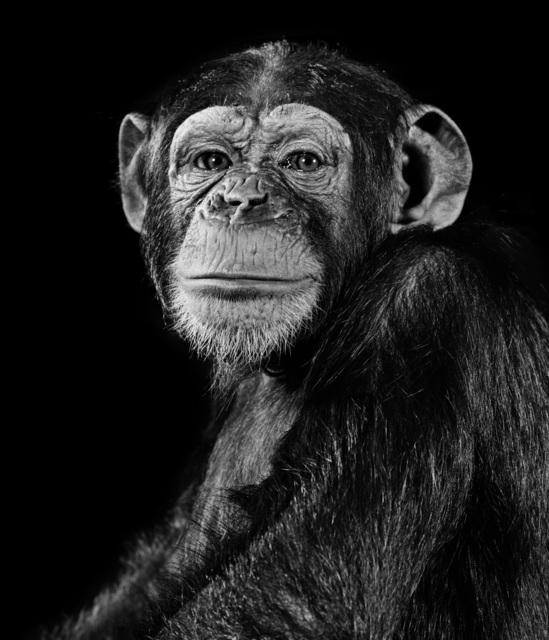 , 'Chimpanzee,' 1992, Galerie Peter Sillem
