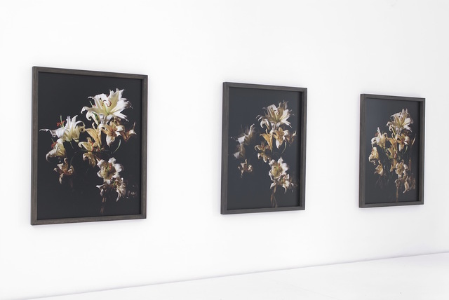 , 'Lilies,' 2010, Brigitte March International Contemporary Art