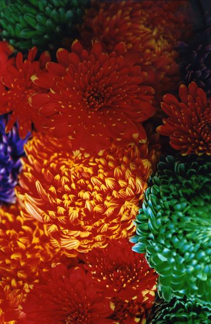 Mika Ninagawa, 'FLOWER ADDICT', 2009, Tomio Koyama Gallery