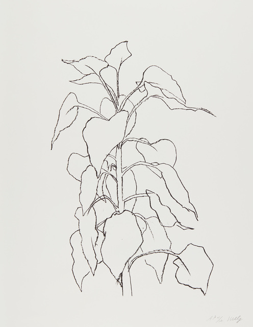 Ellsworth Kelly, 'Sunflower II, from Series of Five Plant and Flower Lithographs', 1995-2004, Phillips