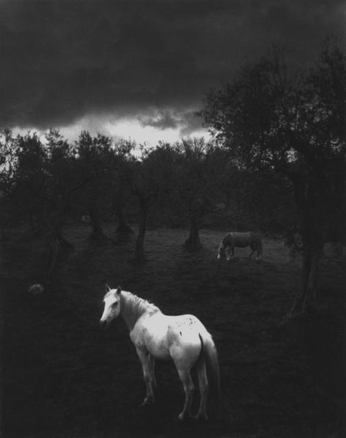 Pentti Sammallahti, 'Cliento, Italy', 2000, Photography, Gelatin silver print, ClampArt