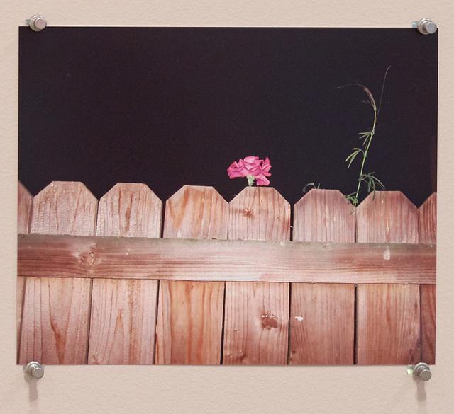 , 'Untitled (Night Rose),' 2016, Diane Rosenstein