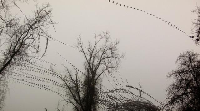 , 'Ground Cloud,' , Diehl Gallery