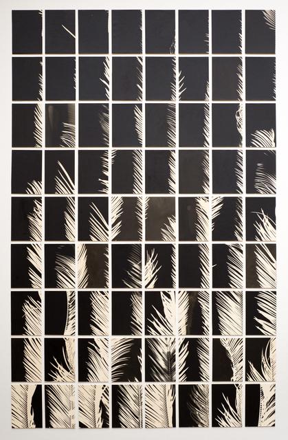 , 'A Palm Tree is a Palm Tree is a Palm Tree (Palmographs),' 2018, Howard Greenberg Gallery