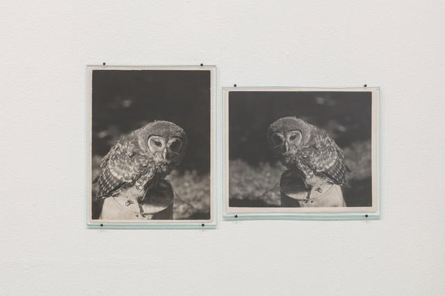 , 'Owl (1932 / 1938),' 2017, Vera Cortês