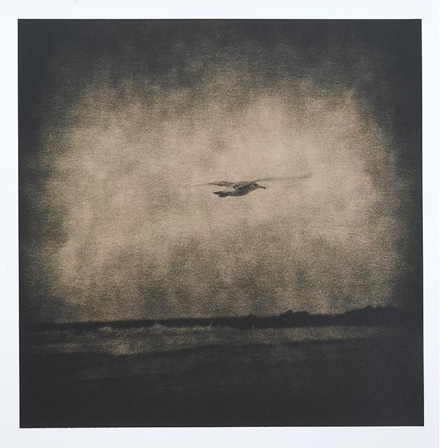 Lara Porzak, 'Seagull', 2014, The Spaceless Gallery