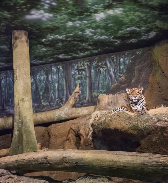 , 'Jaguar and Forest,' 2015, Galerie Dumonteil