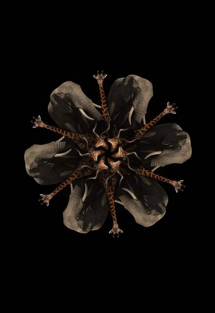 , 'Africa Mandala 2, ed. 1/5,' 2016, Beatriz Esguerra Art