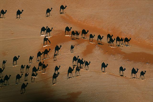 , 'Camel caravan, Wadi Mitan, Oman,' 2004, Anastasia Photo
