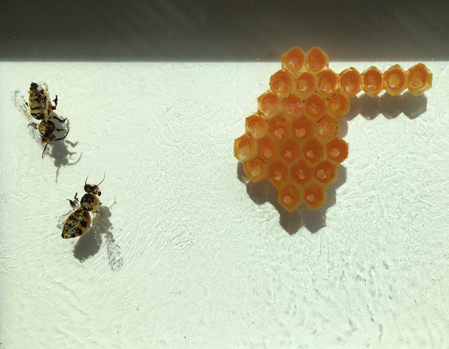 , 'Honey Bee 2 ,' , Peninsula Gallery