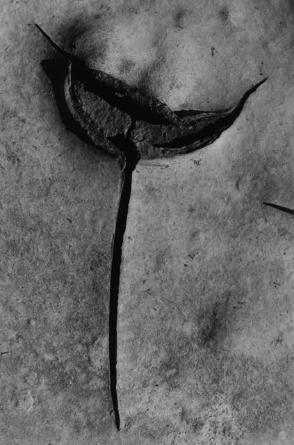 """, 'Craquelure """"l'épée"""" Camargue,' 1985, Bernheimer Fine Art"""