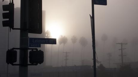 LA Haze 1