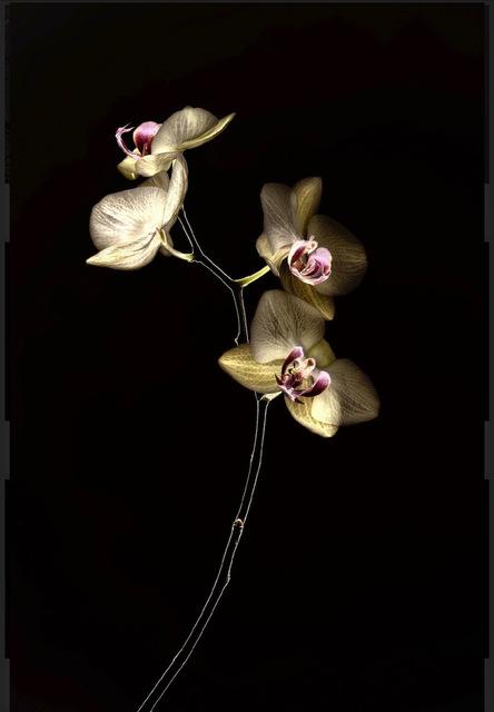 Arman, 'N°6, Light Flowers series (Ed. 1/4 + 1 AP)', 2015, Elga Wimmer PCC
