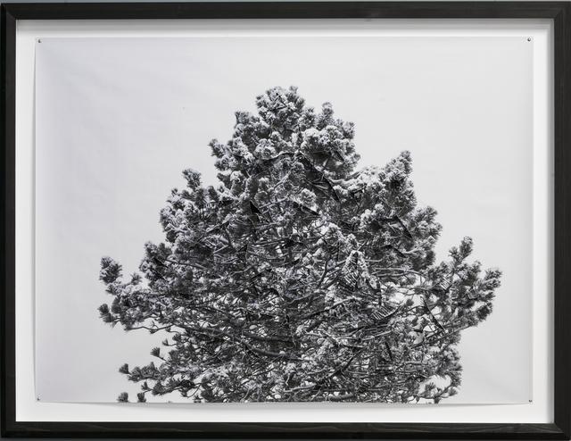 , 'Winter / No. 03,' 2014, Galerie Kornfeld