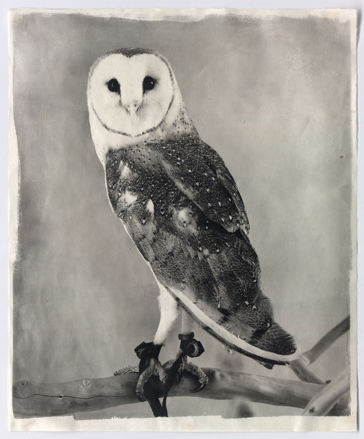 , 'Owl XV,' 2011, Mary Ryan Gallery, Inc