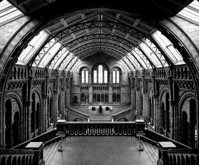 , 'Natural History Museum, Londra,' 2005, Holden Luntz Gallery