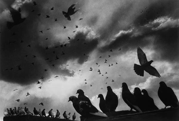 , 'Pigeons,' 1956, Galerie Thierry Bigaignon