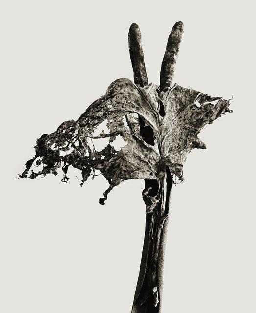 , 'SERIE HERBARIUM, 1982 - 1985 DENDRITA VICTORIOSA,' 1982, espaivisor - Galería Visor