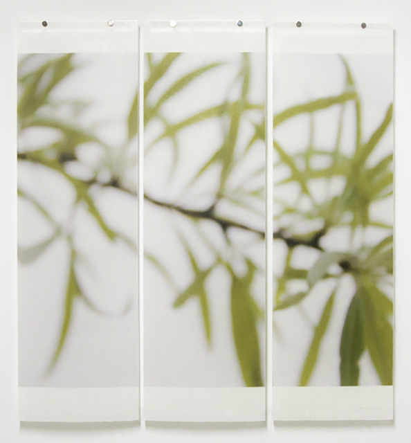 Jeri Eisenberg, 'Silver Pear Willow', 2008, Carrie Haddad Gallery