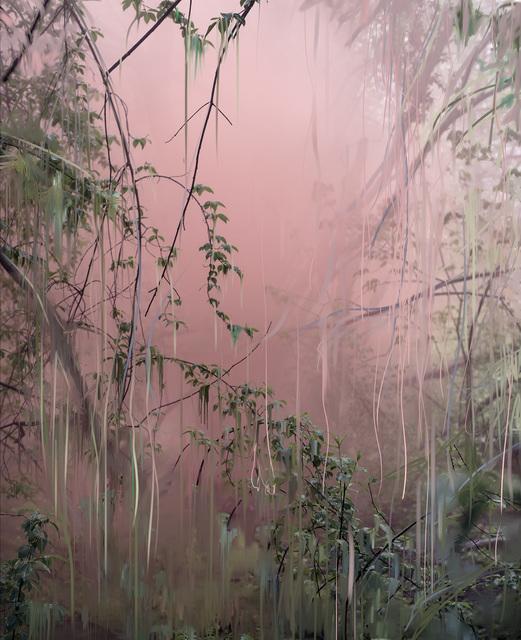 Sandra Kantanen, 'Untitled (Forest 18)', 2019, Bryce Wolkowitz Gallery