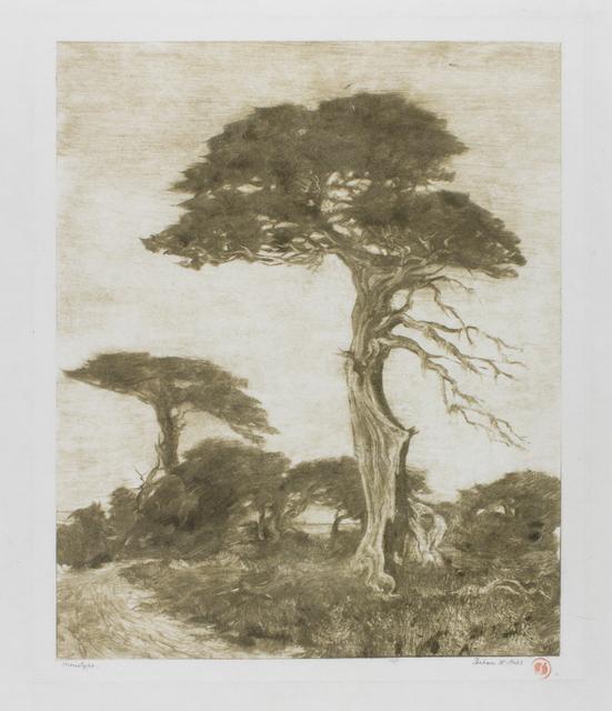, 'Monterey Cypress,' 1914, de Young Museum
