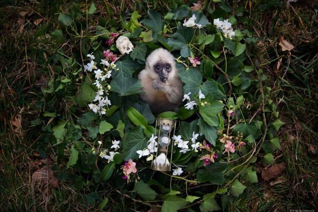 Anne De Carbuccia, 'Baby Gibbon', ca. 2015, Askeri Gallery