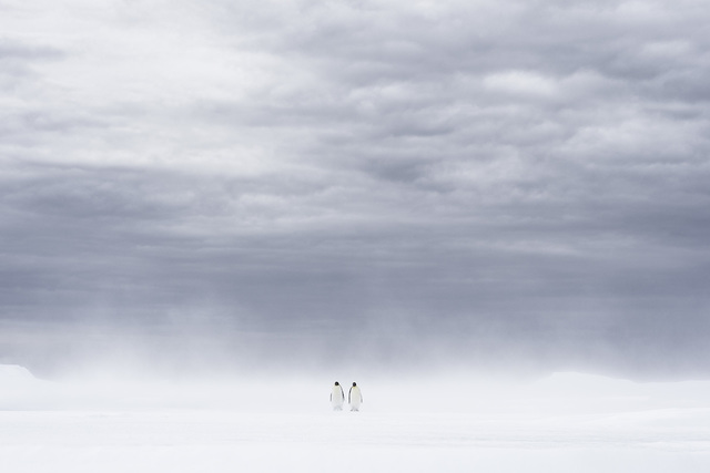 , 'Apparition,' , Paul Nicklen Gallery