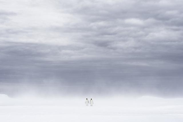 , 'Apparition,' , Paul Nicklen Gallery