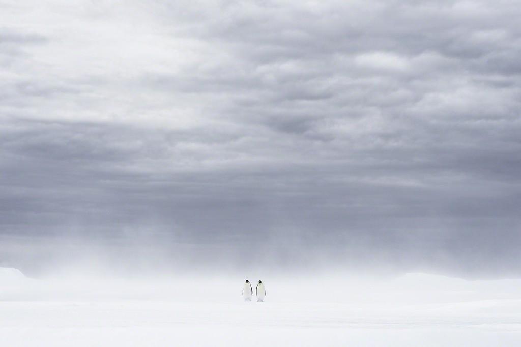 Vincent Munier, U0027Apparitionu0027, Paul Nicklen Gallery