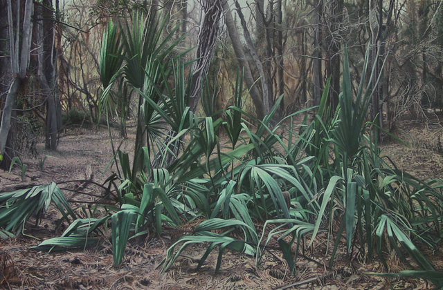 Garrett Middaugh, 'Gathering of Palmettos', Davis Gallery & Framing