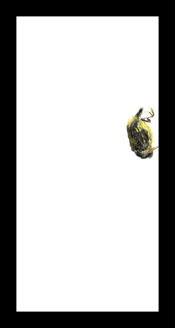 , 'Magnolia Warbler,' 2017, Corkin Gallery