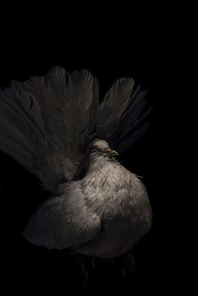 , 'Oiseau I,' , Fotospot