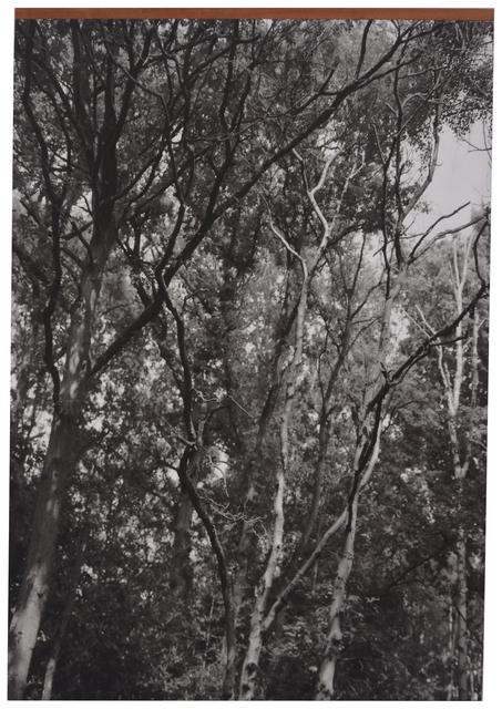 , 'Trees # 1,' 2014, Tatjana Pieters