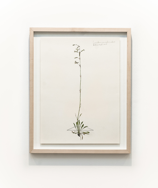, 'From the series Herbarium,' 2015, Galerie Iragui