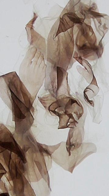 , 'Multiple Draft Model,' 2016, Dominik Mersch Gallery