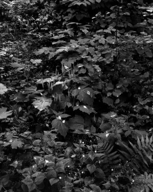 , 'Gartenstück Nr. 7, Weipertshausen,' 2018, Galerie Jordanow