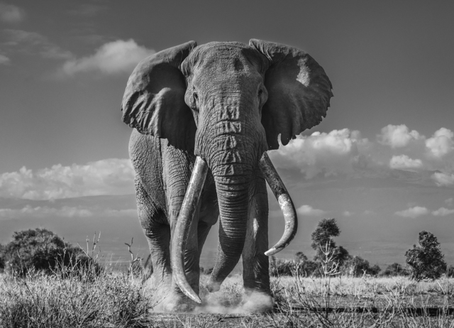 David Yarrow, 'Tim', 2019, Maddox Gallery
