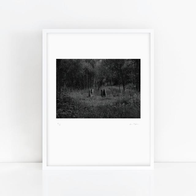 Youki Hirakawa, 'One Tree, Two Stumps', Anima Mundi