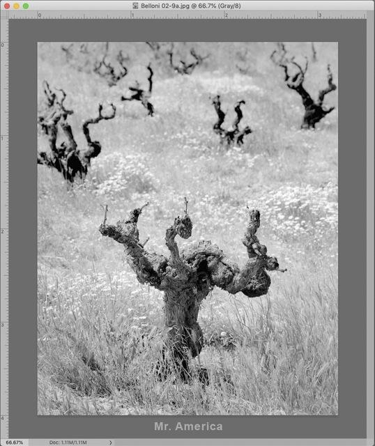 Alan Ross, 'Old Vine Zinfandel (Mr. America)', 2012, Scott Nichols Gallery