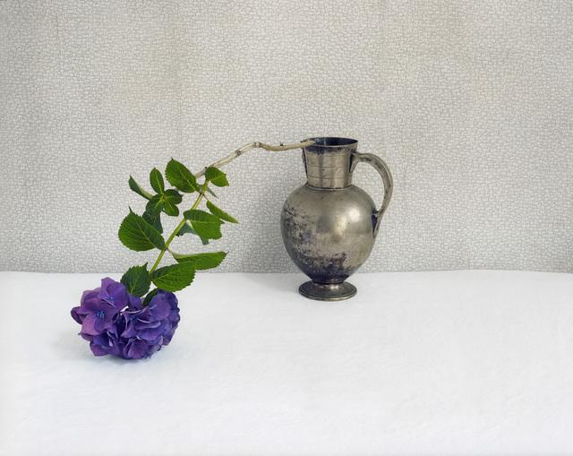 , 'Purple Hydrangea,' 2009, Carrie Haddad Gallery