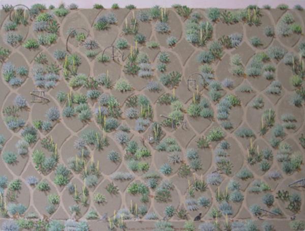 , 'Traps in the Desert,' 1995, David Barnett Gallery