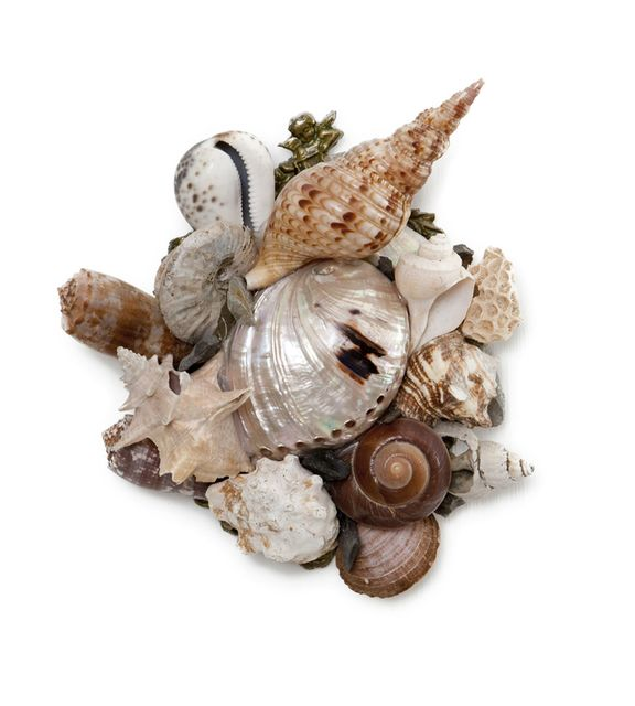, 'Small Shell Series 31,' , Bill Lowe Gallery